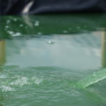 SpirulineBienne_bassin
